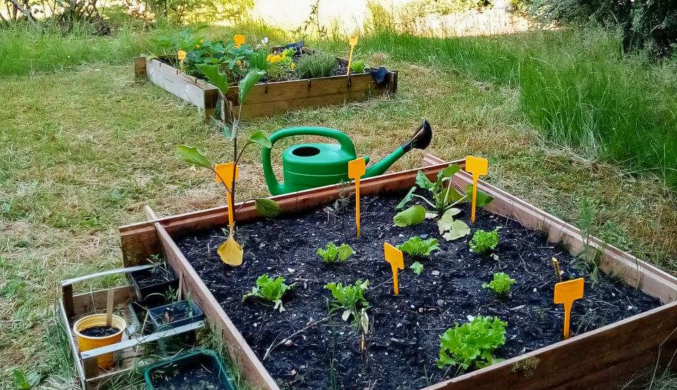 Un carré potager collaboratif dans le jardin des Papillons Blancs 76